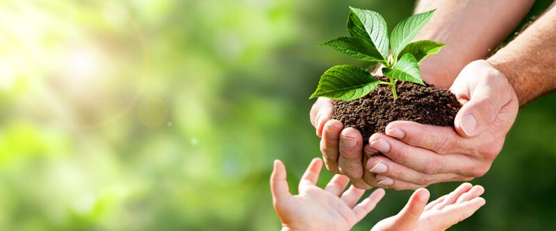 insurance for non-profit organizations | Image of adult hands giving plant to child hands