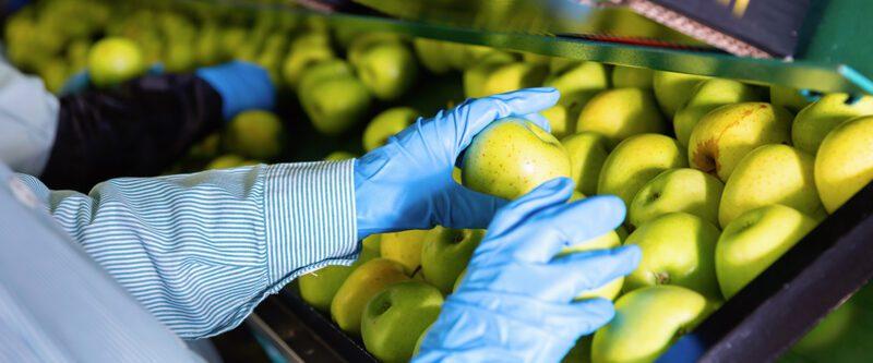 Food Processing Insurance - Green apples on conveyor belt